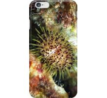Jewell Sea Urchin on a Coral Reef iPhone Case/Skin