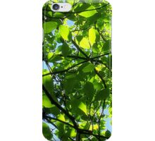 Leaves through sunlight iPhone Case/Skin