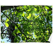 Leaves through sunlight Poster
