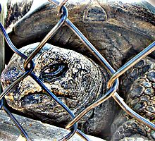Prison Turtle by GolemAura