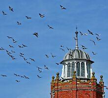 Pigeon Playground ~ Lyme Regis by Susie Peek