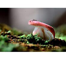 Russula sp. Photographic Print