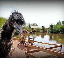 Emu Photobomb by Ladymoose