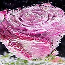 Bubbling Pink Rose by daphsam