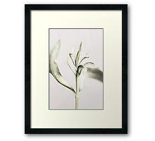 Haiku Framed Print