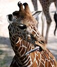 Yes I have a long tongue - I also have a very long neck! by barnsis