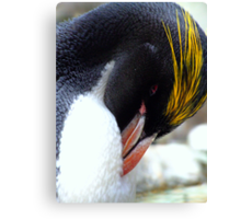 Macaroni Penguin Canvas Print
