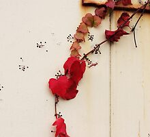Red ivy by Agnes McGuinness