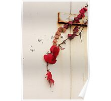 Red ivy Poster
