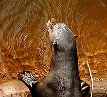 Giant Otter by Ladymoose