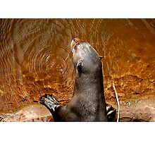 Giant Otter Photographic Print
