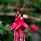 Fuchsia (2) by lezvee