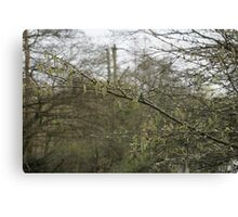 Early catkins Canvas Print
