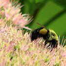 Pollinator by DottieDees