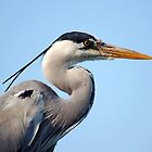 "Front Cover of my calendar ""Grey Heron"" by kilmann"