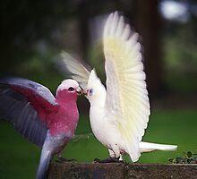 Galah & Corella squabbling by Bev Pascoe