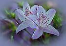 Azaleas by Sandy Keeton