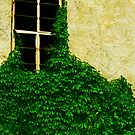 Garden Window by DLDesignWorks