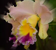 'picture perfect' Orchid 6 by Wieslaw Jan Syposz