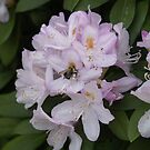 Bee in Spring by Edyth Counter-Griffis