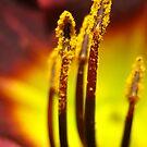 phallus in wonderland by Mark Cosgriff