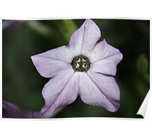Earthly Star Poster