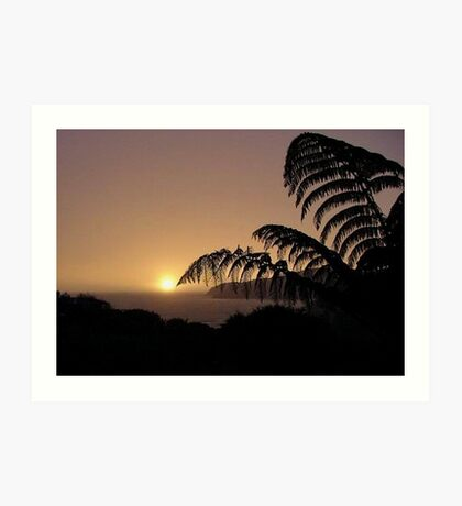 New Zealand fern at sunset......!  Art Print