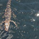 GiGi the Gator by Jessa Munoz-Dorr
