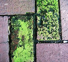 Moss on Courtyard Bricks by clizzio