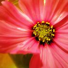Pink Flower by debsdesigns