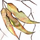 Gum Leaves by Sarah Donoghue