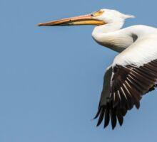 White Pelican 4-2015 Sticker