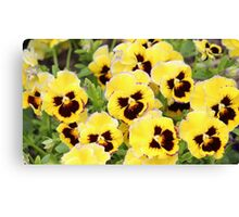 Yellow And Brown Flowers Canvas Print
