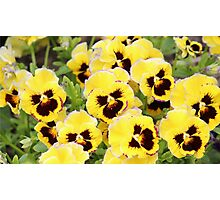 Yellow And Brown Flowers Photographic Print
