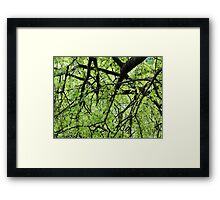 Green Tree Branches Framed Print