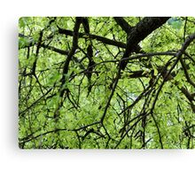 Green Tree Branches Canvas Print