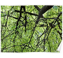 Green Tree Branches Poster