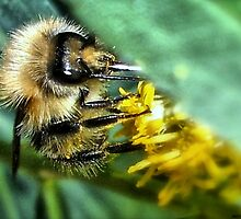 The Pollinator!! by naturelover