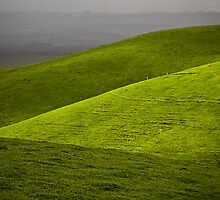 folds of green by Tony Middleton