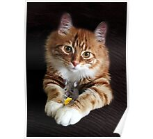 OPPOSITES DO ATTRACK...BEST FRIENDS,FELINE AND MOUSE, PILLOWS,TOTE BAGS,PICTURES,ECT. Poster