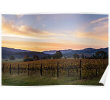 Sunset over the vines Poster