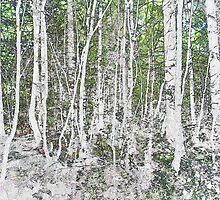 Woodland - green spring light by Sandra O'Connor