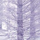 Winter blue by Sandra O'Connor