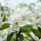 Fanciful Blossoms by Rebecca Bryson