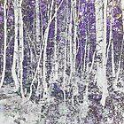Night silver birches by Sandra O'Connor