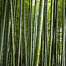 Bamboo forest by philippeB