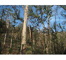 Hairy Trees Photographic Print