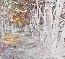 Autumn woodland by Sandra O'Connor
