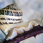 Snail and Thorns by Christian  Zammit