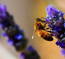 busy bee by Joel Wigley